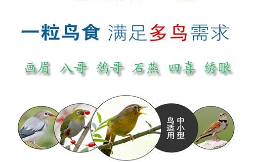 鸟食优选生棒鸟食鸟粮鸟饲料_专注斗鸟食鸟粮_提性稳性壮膘