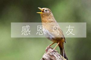 感谢鸟友(摸鱼遛鸟)为生棒作诗三首